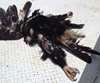Figure 2: Some of the bird remains retrieved from the cockpit. Source: Pilot