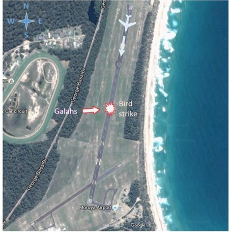 Figure 1: Moruya Airport showing aircraft and galah flock direction of travel and approximate impact point