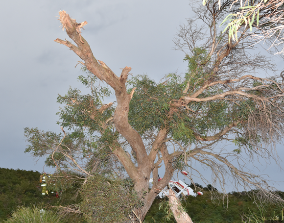 Figure 2: Accident site facing west, showing the tree branch struck by the aircraft's right wing and the rising terrain in the background. Source: Tasmania Police