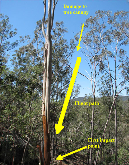 Figure 3: Tree canopy damage