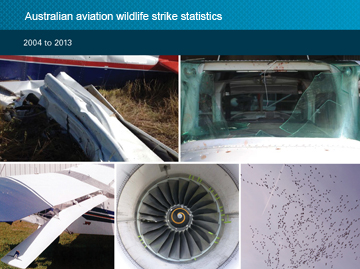 Australian aviation wildlife strike statistics 2004 - 2013