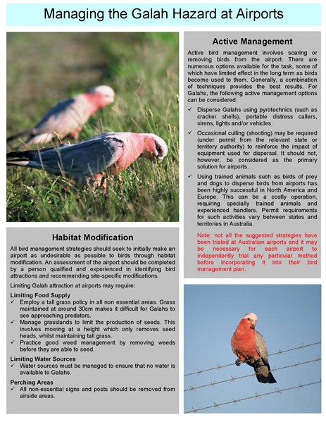 ATSB Bird Information Sheet No 6