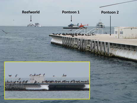 Figure 4: Hardy Reef HLS and bird hazard (inset). Source: ATSB